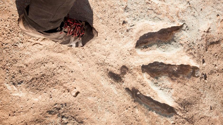 How do dinosaur footprints get fossilised? © Getty