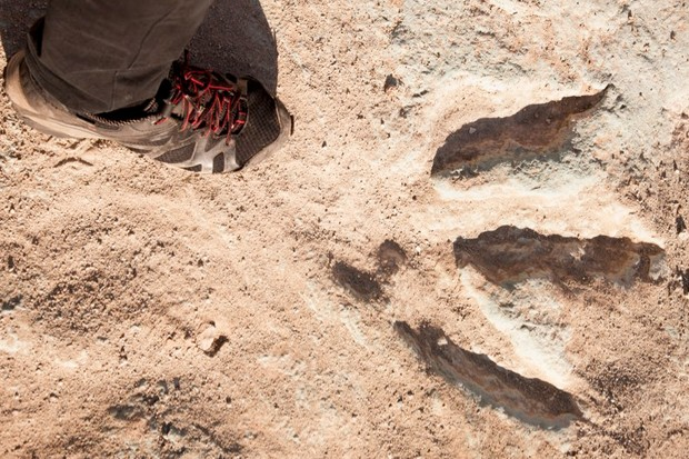 How do dinosaur footprints get fossilised? © Getty