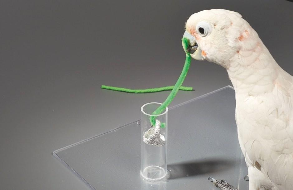Slick as a parrot © University of Vienna