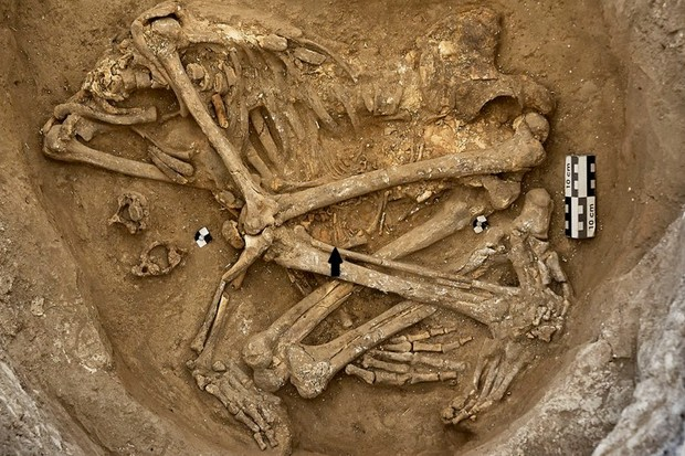 Neolithic burial from Çatalhöyük, Turkey, is represented by a headless young adult female with a fetal skeleton (arrow). Skull removal was a burial custom practiced in number of instances at this locality © Image courtesy of the Çatalhöyük Research Project/Jason Quinlan.