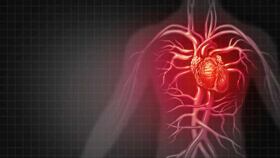 Why is the heart slightly to the left in the chest? © Getty Images
