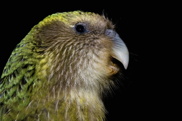 What is a kakapo? © Getty Images