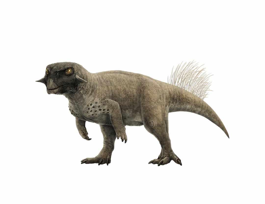 Psittacosaurus sp. © Gabriel Ugueto