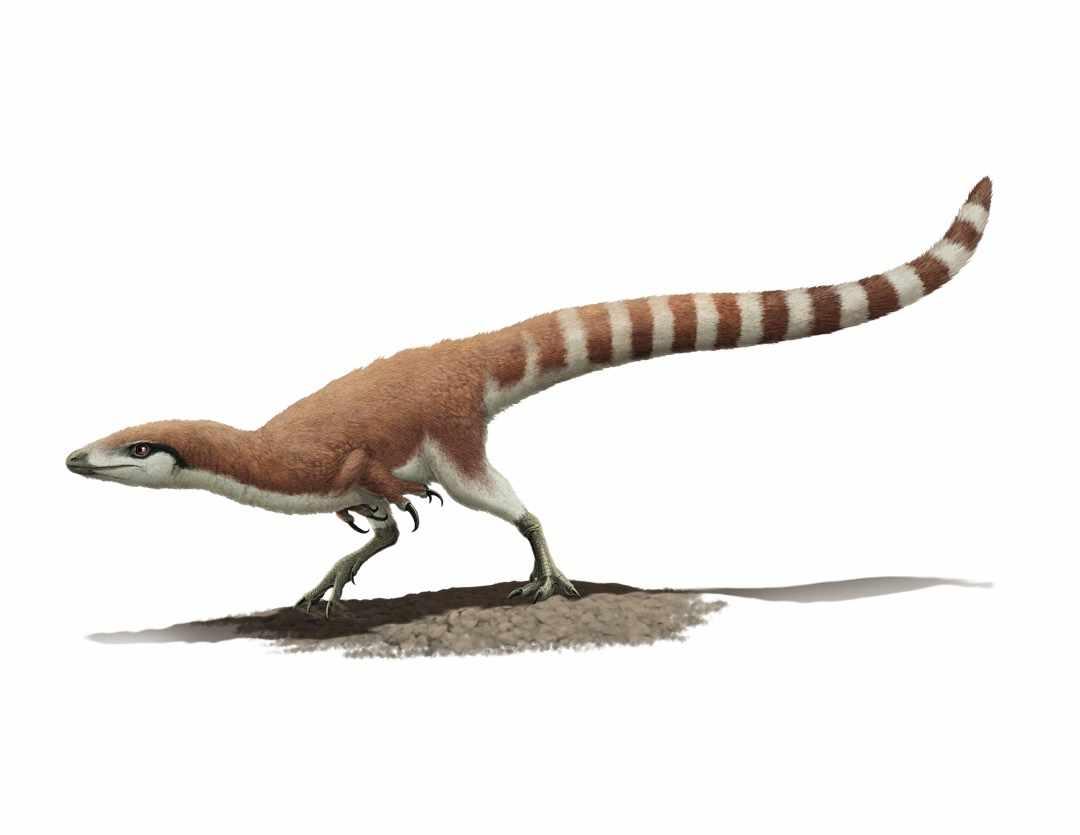 Sinosauropteryx prima © Gabriel Ugueto