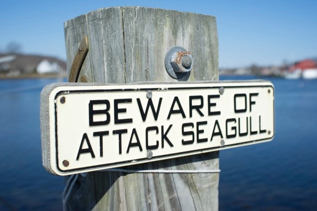 Seagulls: are they getting more aggressive? © Getty Images