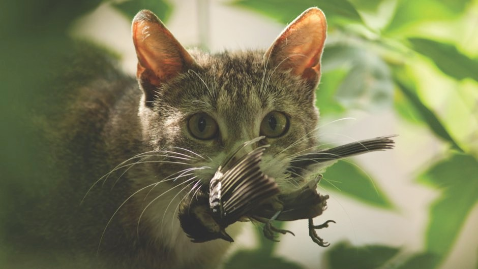 Pet Cats Should They Be Kept Indoors Bbc Science Focus Magazine
