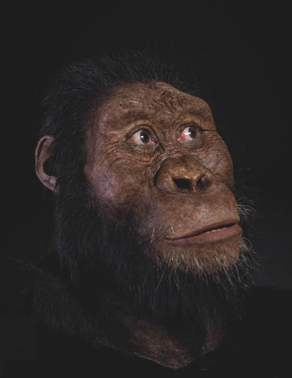 Facial reconstruction of A. Anamensis © ESA