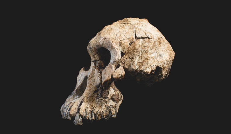 Side view of the skull © ESA