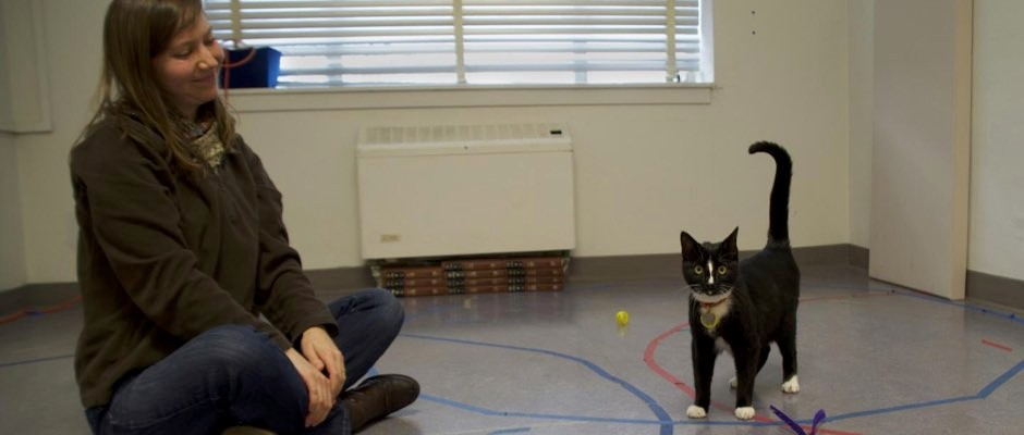 Cats do form strong social bonds with their owners