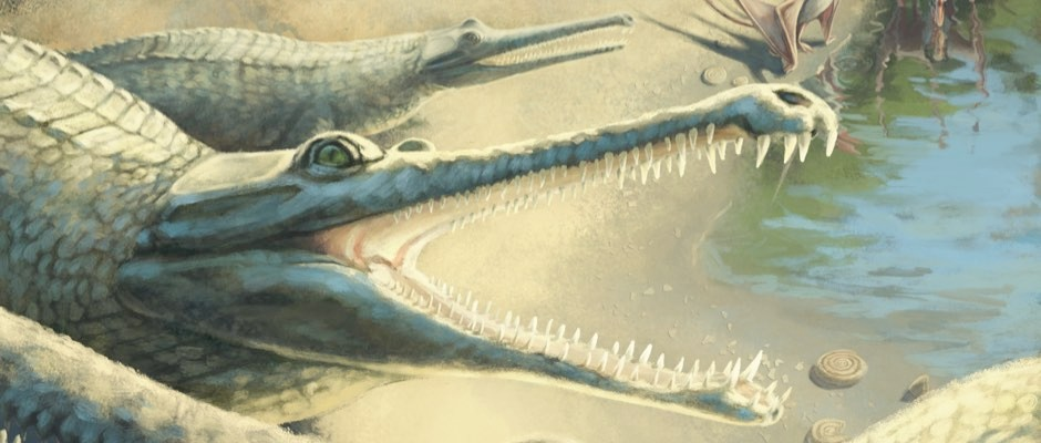 Make it snappy! Crocodile fossil identified after 250 year wait