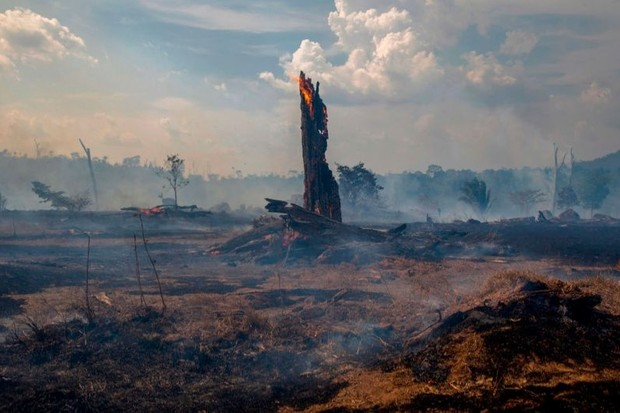 The Amazon rainforest: could it become a desert? © Joao Laet/AFP/Getty Images