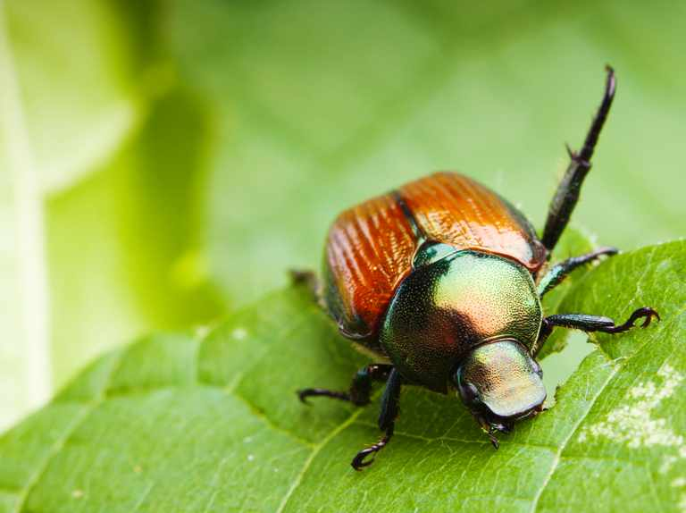 Why do some insects look metallic?