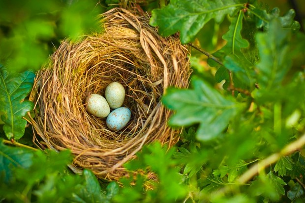 How do baby birds breathe inside their eggs? © Getty Images
