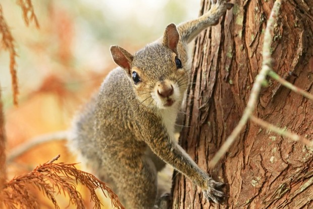 Squirrels eavesdrop on birds to check for predators © Getty Images