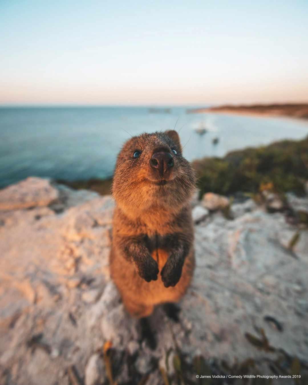 Excuse me © James Vodicka / Comedy Wildlife Photo Awards 2019