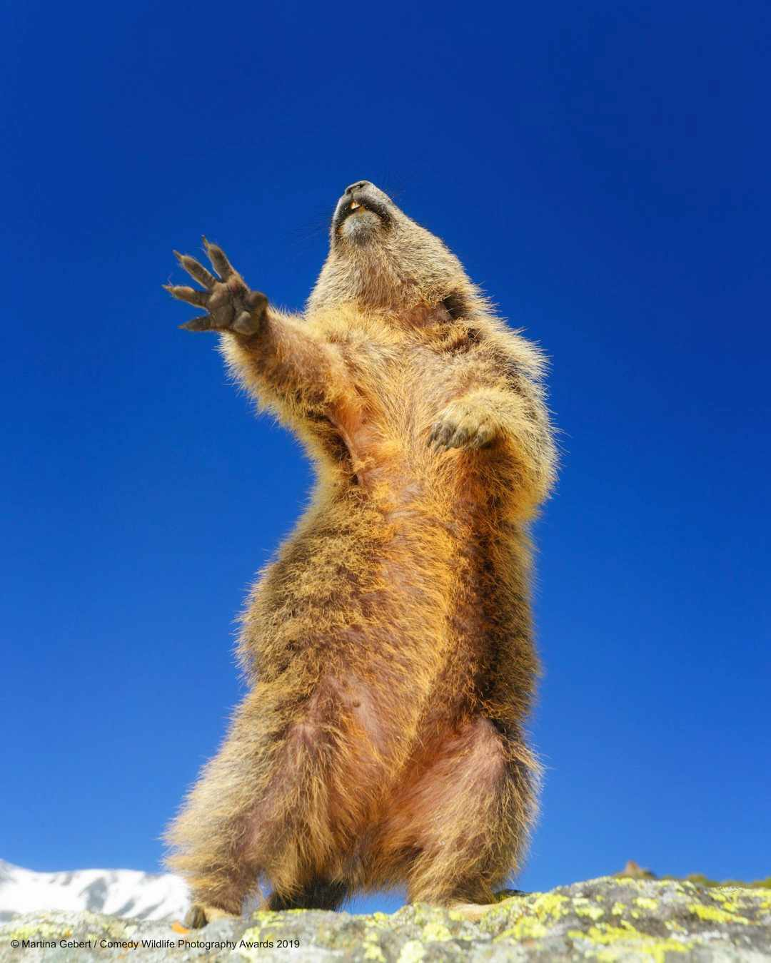 Dancing, yeah! © Martina Gebert / Comedy Wildlife Photo Awards 2019