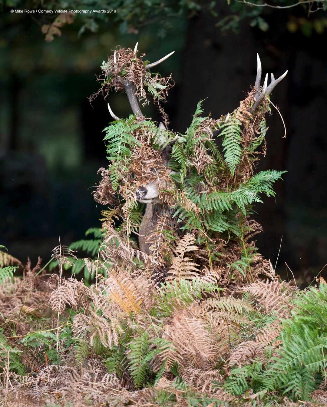 Deer? what deer? © Mike Rowe / Comedy Wildlife Photo Awards 2019