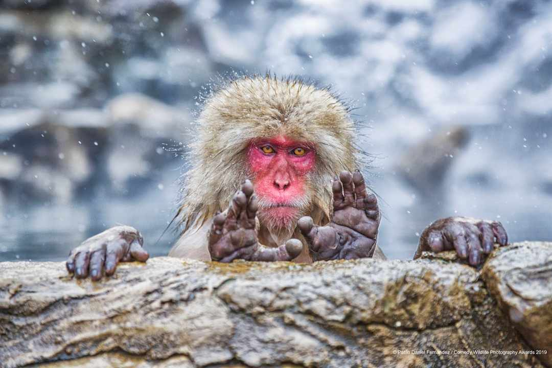 What are you looking for? © Pablo Daniel Fernandez / Comedy Wildlife Photo Awards 2019
