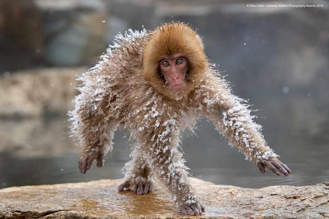 Space man © Roie Galitz / Comedy Wildlife Photo Awards 2019