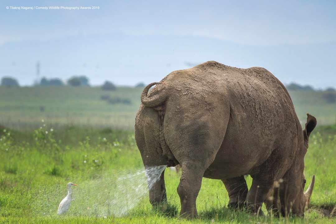 Warning – Territory marking – wait at your own risk © Tilakraj Nagaraj / Comedy Wildlife Photo Awards 2019