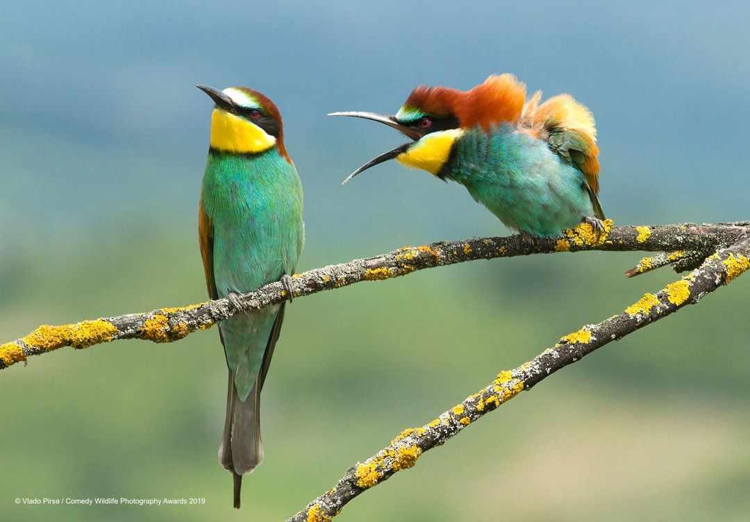 Disagreement © Vlado Pirsa / Comedy Wildlife Photo Awards 2019