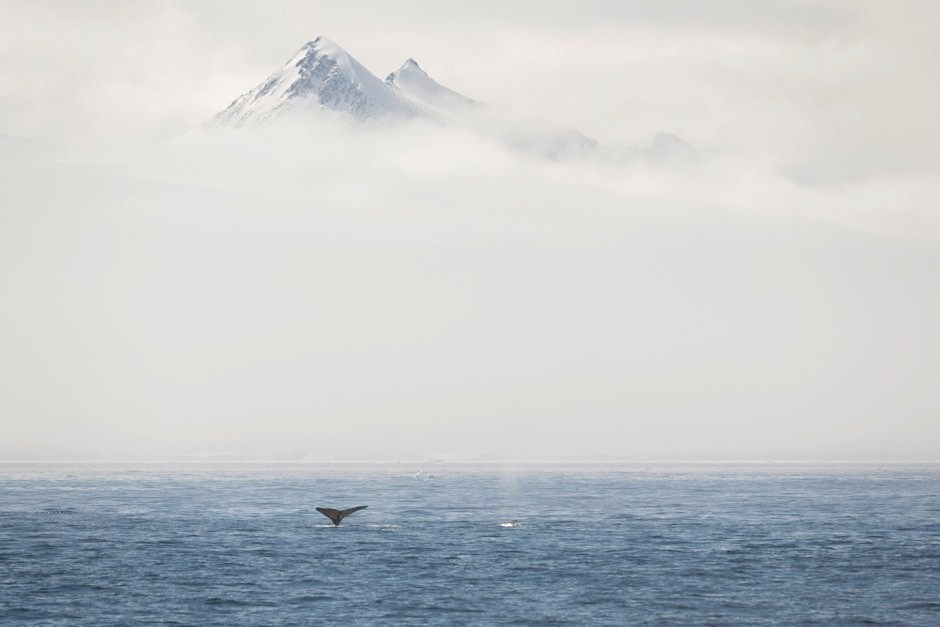 Fog surrounding mountains in the Antarctic (Christian Aslund/Greenpeace/PA)