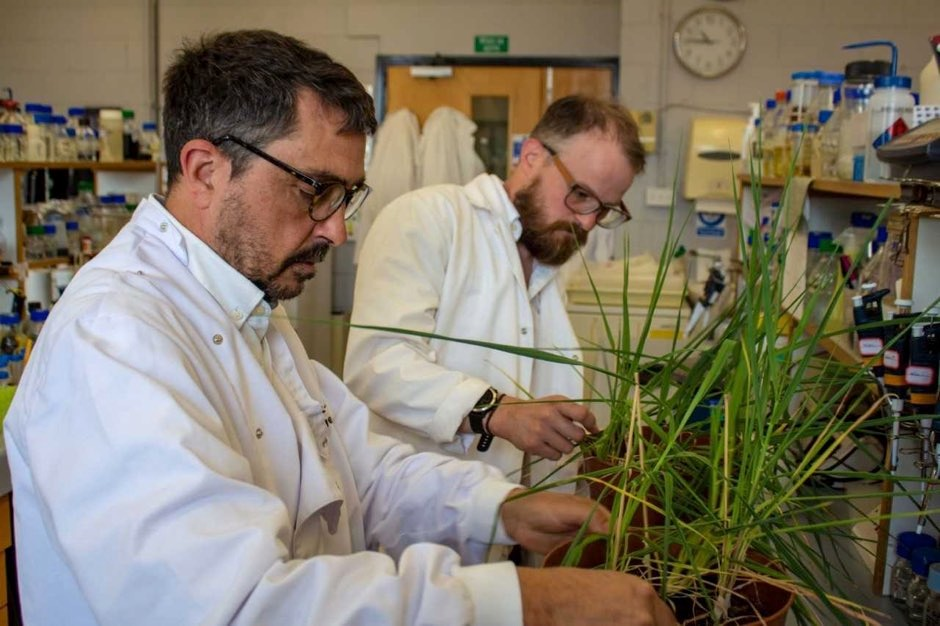 Peter Morris and Ross Alexander examine barley plants in the lab (Heriot Watt University/PA)
