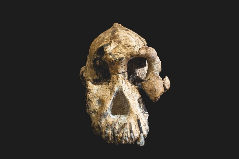 Front view of the skull © ESA