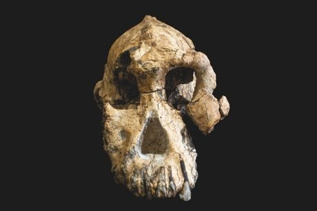 Fossilised skull reveals face of early human ancestor © ESA