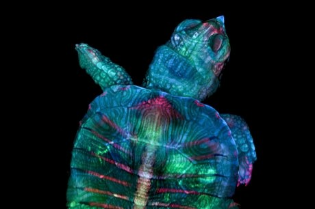 Nikon Small World Photomicrography Competition: 20 magnificent pictures of the microscopic world