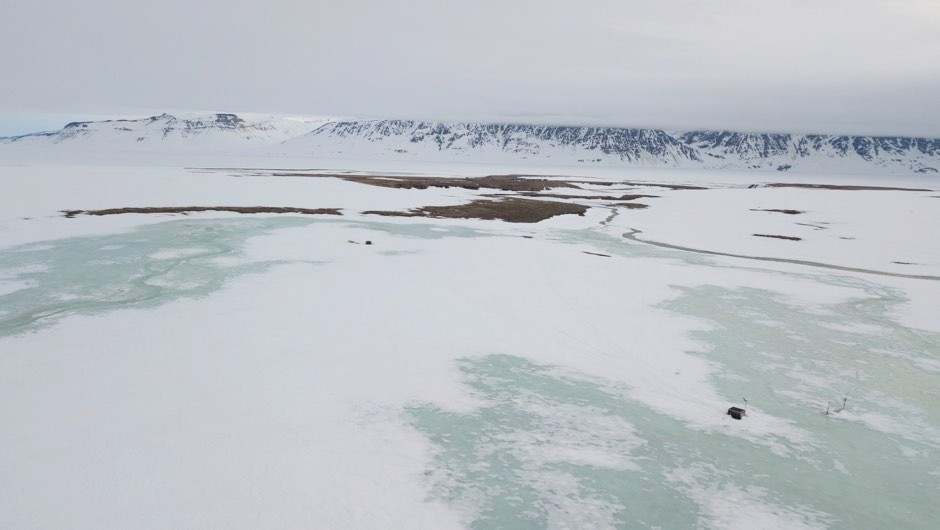 Last year's extreme snowfall wiped breeding of plants and animals in a region of the Arctic