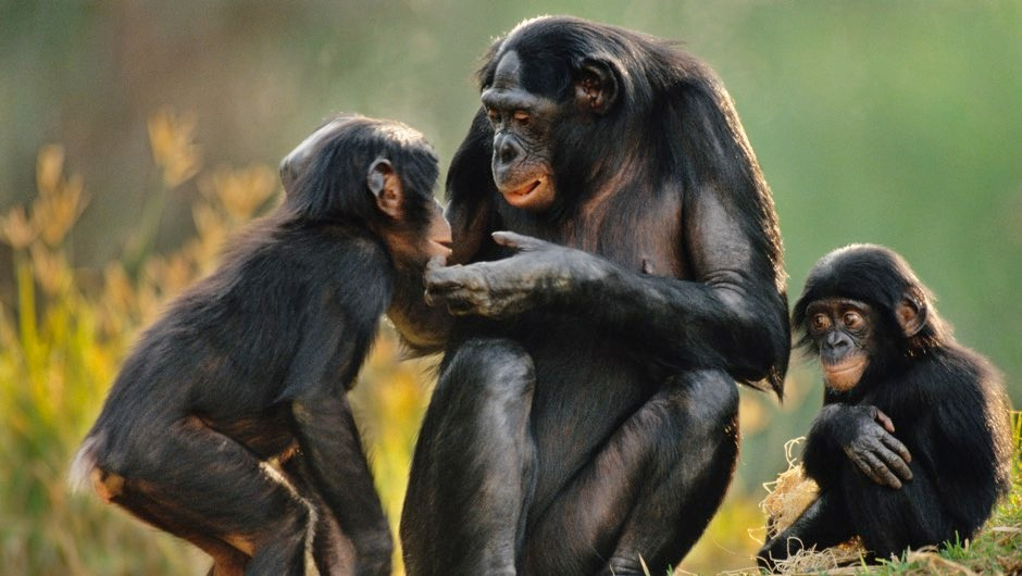 Great apes understand others' point of view