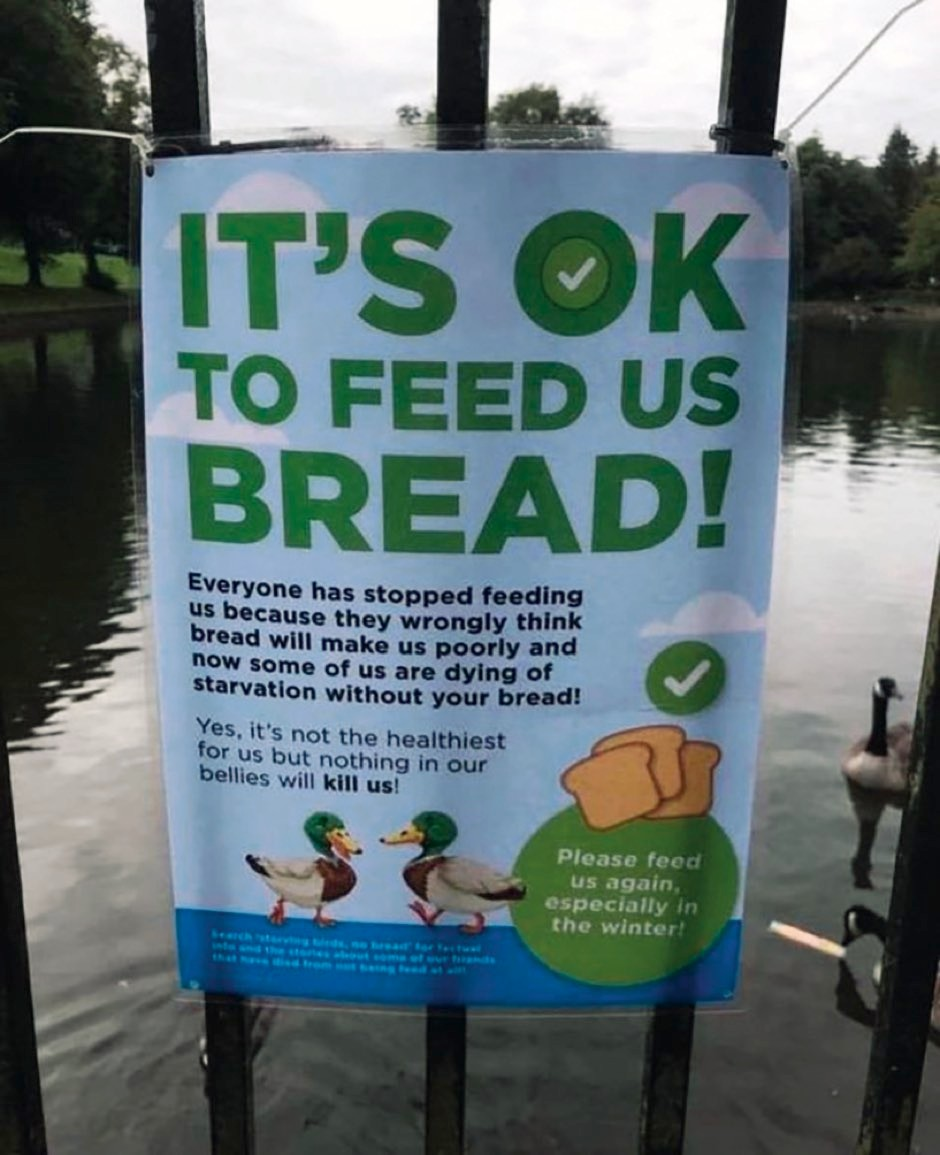 """The sign that went viral, reading """"It's OK to feed us bread!"""""""