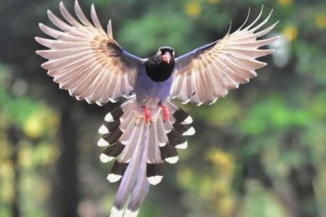 Flightless birds' feathers offer clues to evolution of flight