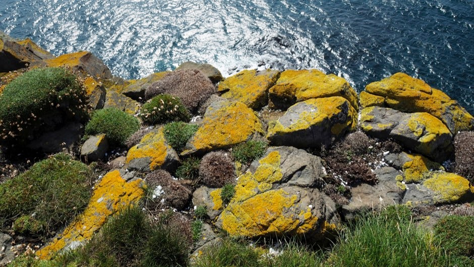 Lichen age discovery reshapes understanding of complex ecosystem evolution