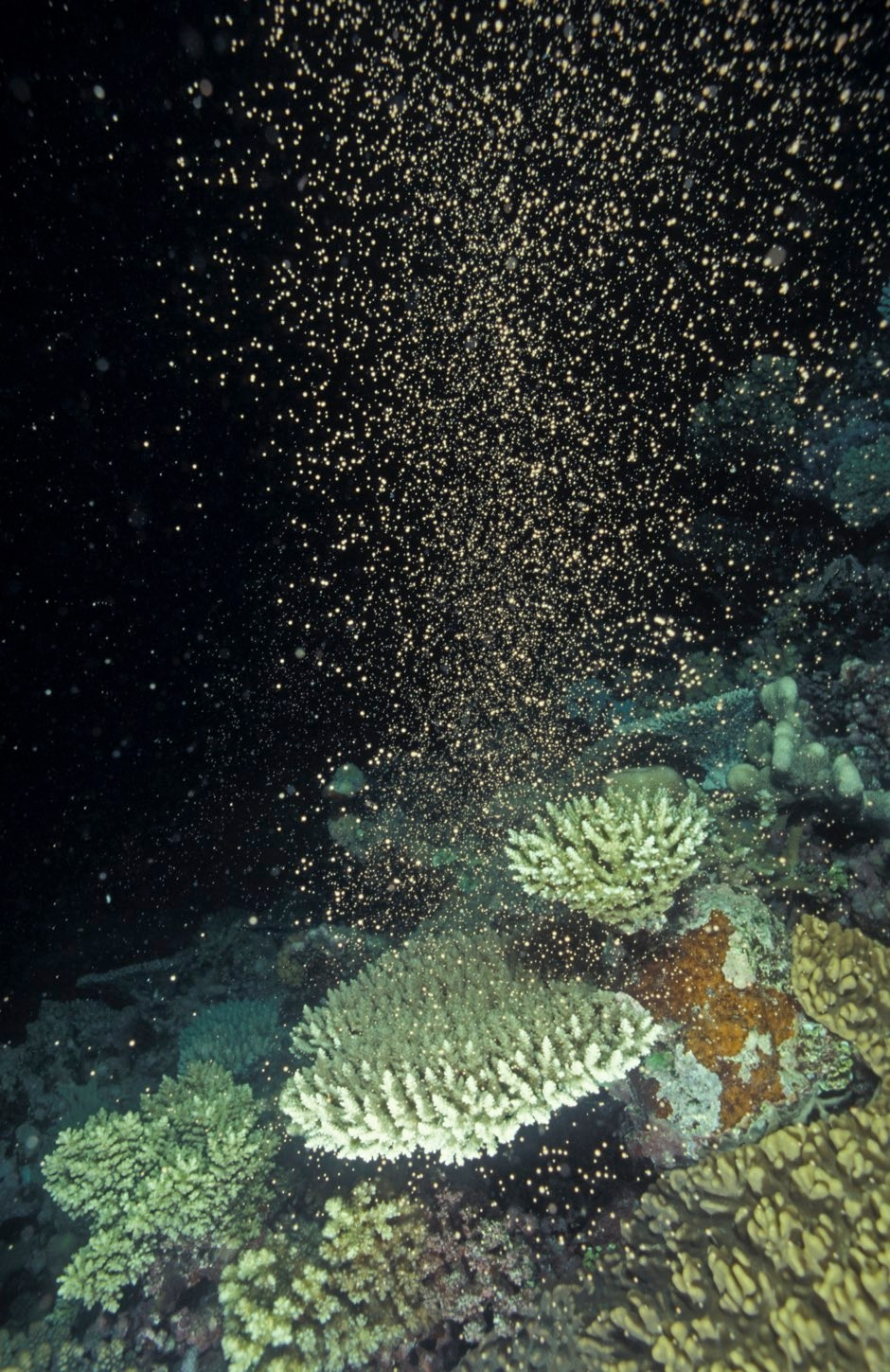 Corals, like the ones spawning here, are a promising source of new drugs © Getty Images