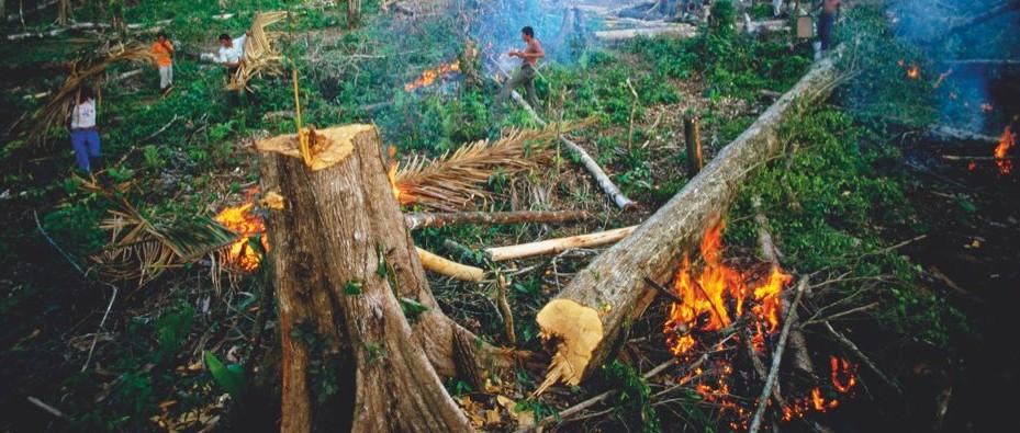 War on drugs' is driving deforestation - BBC Science Focus Magazine