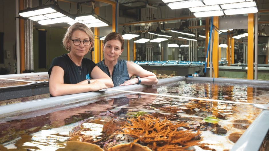 Prof Madeleine van Oppen (right) and Line Bay are creating tougher corals that could cope with changing ocean conditions © Cameron Laird