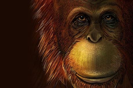 Extinct 2-million-year-old giant ape was direct relative of orangutan (Artist reconstruction of Gigantopithecus blacki © Ikumi Kayama/Studio Kayama LLC)