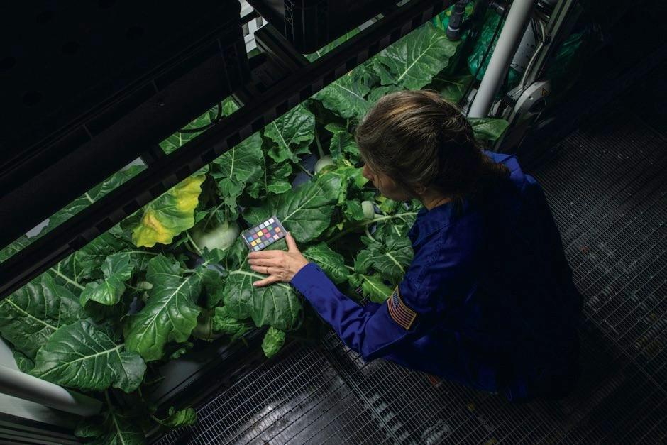 Dr Anna-Lisa Paul with kohlrabi plants © Esther Horvath