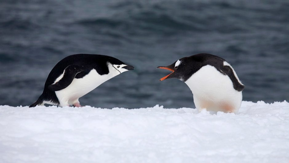 Antarctic penguins' diet affected by climate change and human activity