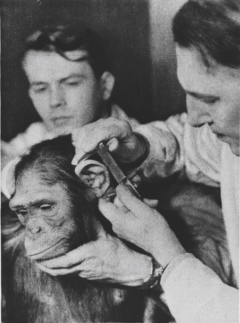 Nazi scientists developed a system of human and ape facial measurements to establish racial descent. They used biased results to back up their claims that Aryan Germans were more evolved, while Jewish people were closer to apes © Getty Images