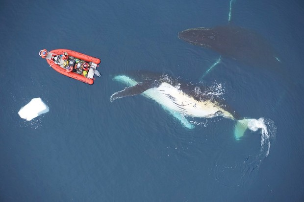 Whale size can be curbed by the availability of prey © GoldbogenLaboratory, StanfordUniversity/Duke University Marine Robotics and Remote Sensing/PA