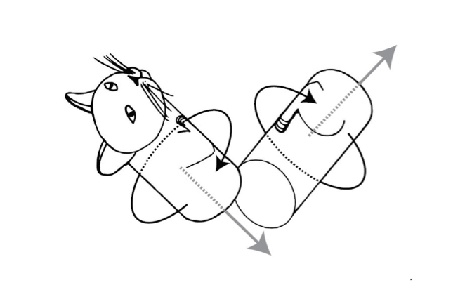 """Illustration of the """"bend-and-twist"""" model of Rademaker and ter Braak © Sarah Addy"""