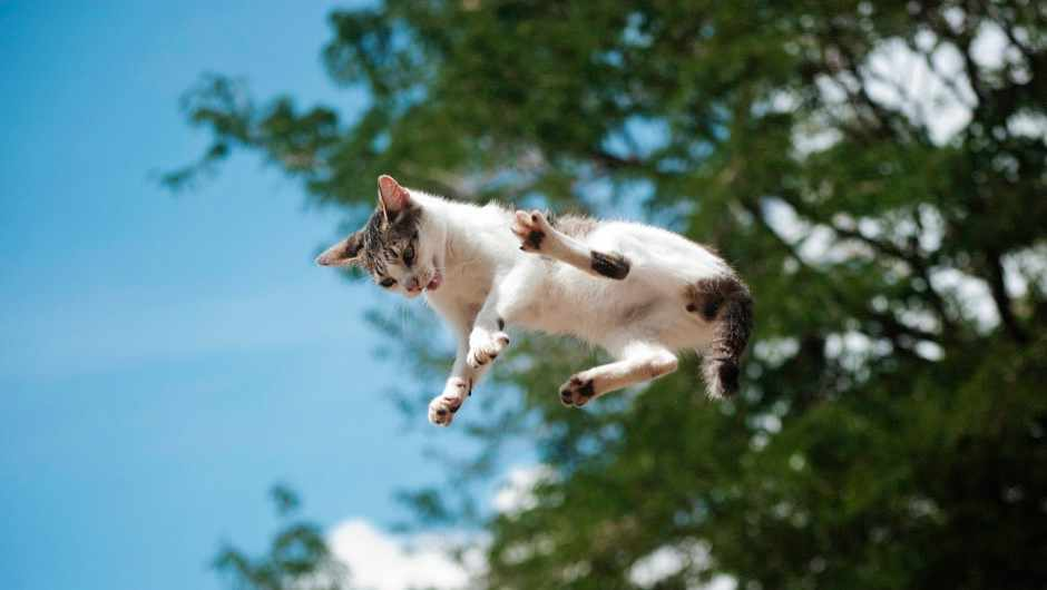 The enduring puzzle of why cats always land on their feet © Getty Images