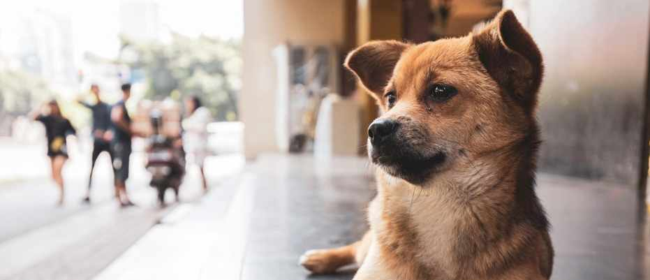 Even stray dogs understand human gestures, study finds © Getty Images