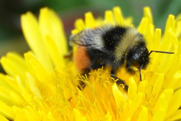For bees, the sweeter the nectar, the harder to vomit © Getty Images