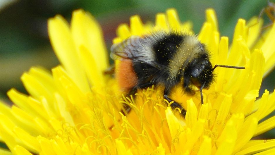For bees, the sweeter the nectar, the harder to vomit