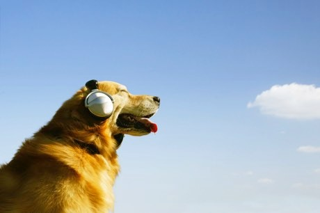 Pet Shop Boys or Snoop Dog? Spotify releases personalised pet playlists © Getty Images
