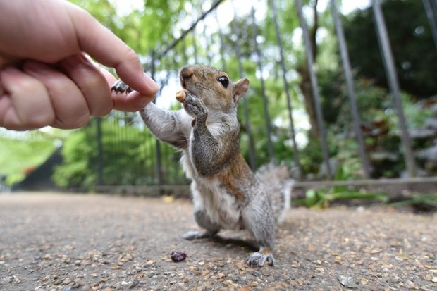 Being an ambidextrous squirrel better than being one with a strong hand preference © Getty Images